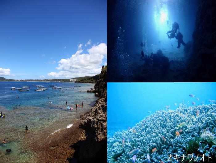 真栄田岬のダイビングやサンゴ、魚