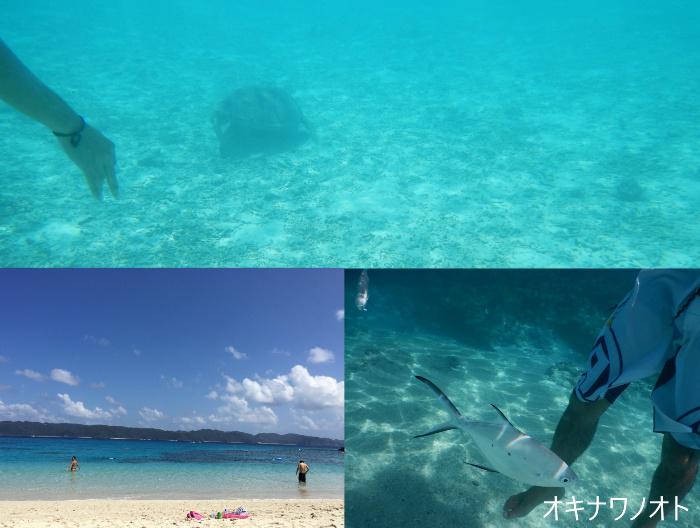 座間味島でのシュノーケリング、ウミガメ発見!