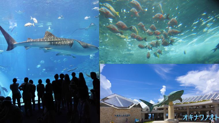 美ら海水族館の外観やジンベエザメなどの魚の写真